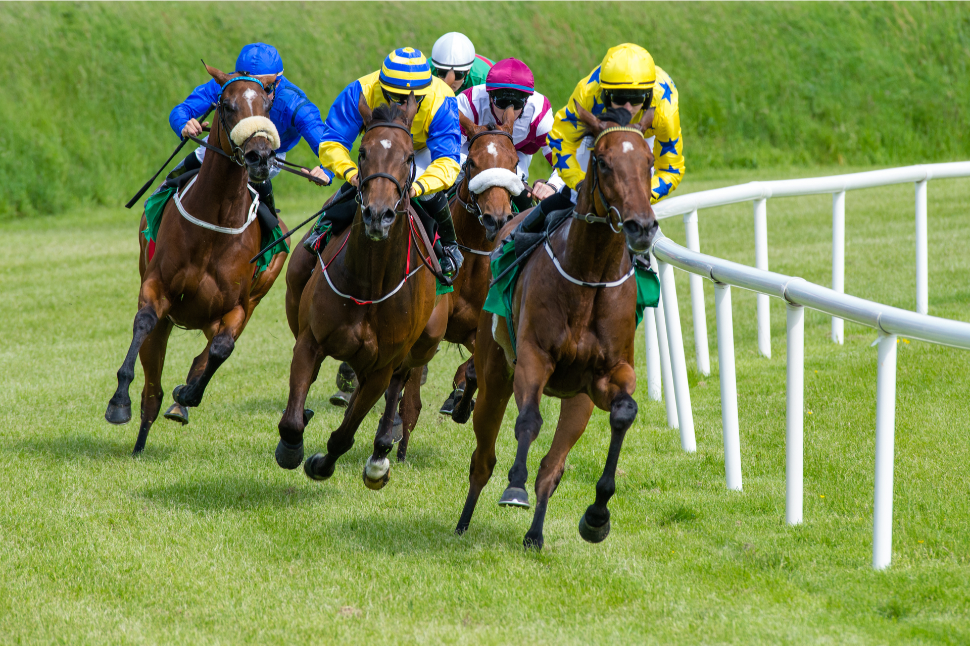 Race horses galloping in racing competition