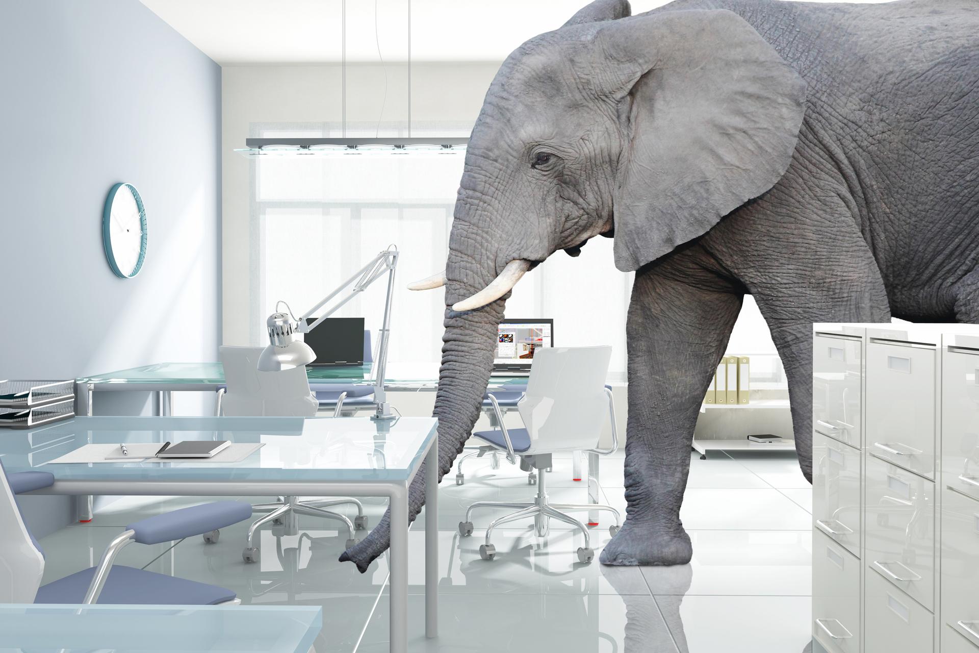 huge elephant in modern office
